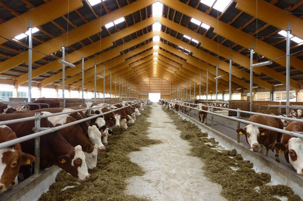 фото фермы