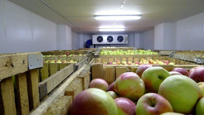 двери для фруктохранилища